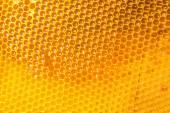 čerstvý med hřeben — Stock fotografie