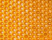 Honey in honeycombs — Stock Photo