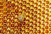 Trabajo de abeja en panal. — Foto de Stock
