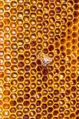 Trabalho de abelha no favo de mel — Fotografia Stock
