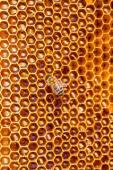 Trabalho de abelhas no favo de mel. — Fotografia Stock