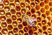 Working bees on honeycomb  — Stock Photo