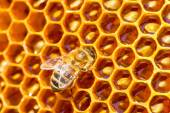 Bees work on honeycomb. Honey cells pattern. — Stockfoto