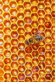 Honey cells pattern.bees work on honeycomb. — Stock Photo