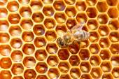 Bee working on honeycomb. — Stock Photo