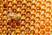 Working bee on honey cells — Stock Photo