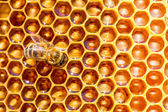 Working bee on honey cells — Zdjęcie stockowe