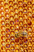 Bee works on honeycomb — Stock Photo
