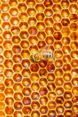 Bees work on honeycomb. Honey cells pattern. — Stock Photo