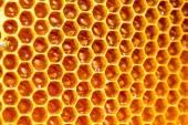 Miel de abeja en panal — Foto de Stock