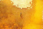Abeja trabajar en panal con miel dulce — Foto de Stock