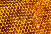Bee honey in honeycomb — Stock fotografie
