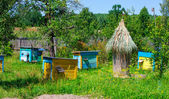 Apiary   in the sunny day  — Stock Photo