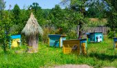 Colored beehives on apiary — Stock Photo