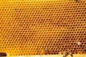 Buňky pattern.bees práce na plástev medu. — Stock fotografie