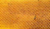 Včela pracovat na honeycomb s med sladký — Stock fotografie