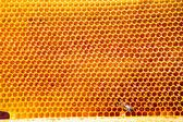 Včela na med buňky — Stock fotografie