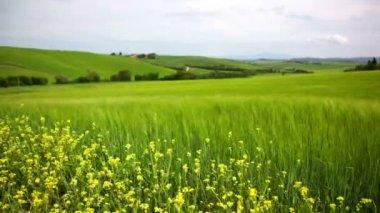 Tuscan landscape — Stock Video