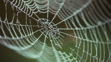 Big web in drops of dew shivers — Stock Video