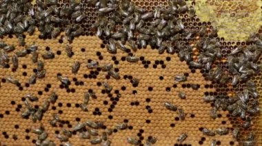 Bees honeycombs filled with honey — Stock video