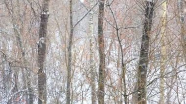 Heavy Snowfall in forest — Vídeo stock