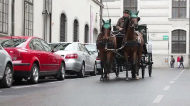 Horse carriage On  street — Stock Video