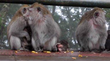 Family of monkeys sitting — 图库视频影像