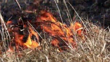 Spring Burning Grass — Stock Video