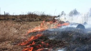 Grass fire in the field — Stock Video