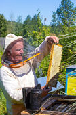 Beekeeper holding bees and honeycomb — Stock Photo