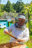 Travail apiculteur et cadre avec les abeilles. — Photo