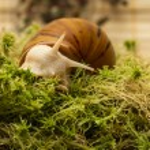Albino snail — Stock Photo #60463879