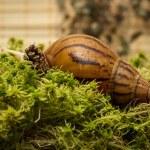 Albino snail — Stock Photo #61088943