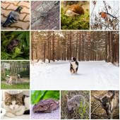 Collage with animals — Stock Photo