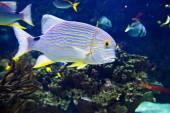 Undersea world — Stock Photo