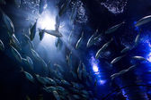 Shoal fish — Stock Photo