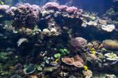 Podmořský svět — Stock fotografie