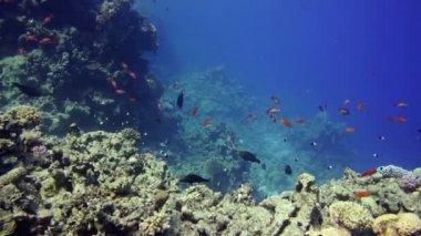Recife debaixo d'água colorida com peixes de coral — Vídeo stock