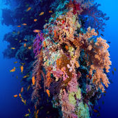 Colorful underwater reef with coral and sponges — Stock Photo