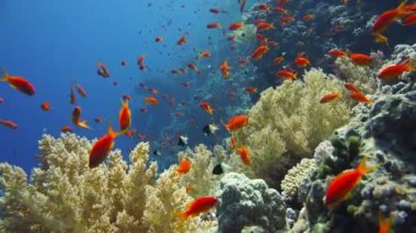 Colorful underwater reef with tropical fish — Stock Video