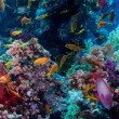 Colorful underwater reef with coral and sponges — Stock Photo #58808975
