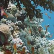 Tropical fish and rocky reef — Stock Video #58975883