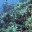 Tropical fish and rocky reef — Stock Video #58982447