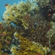 Tropical fish and rocky reef — Stock Video #58985091
