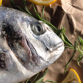 Raw dorado fish with rosemary and sea salt — Stock Photo
