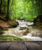 Creek in the forest — Stock Photo