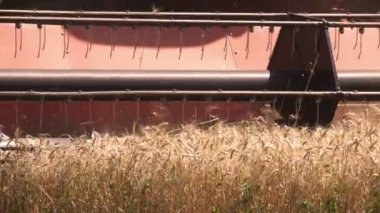 Combine harvester harvesting — Stock Video