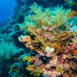 Colorful underwater reef with coral and sponges — Stock Photo #63406967