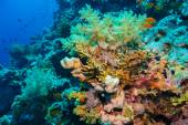 Colorful underwater reef with coral and sponges — ストック写真