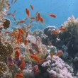 Tropical fish swimming  in ocean — Stok video #63794347